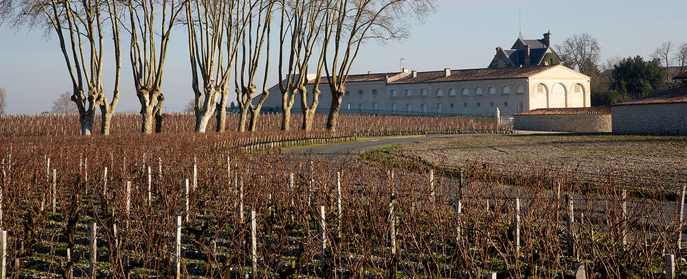 Hivers-ceps-Vignes-Mouton-Rothschild.jpg