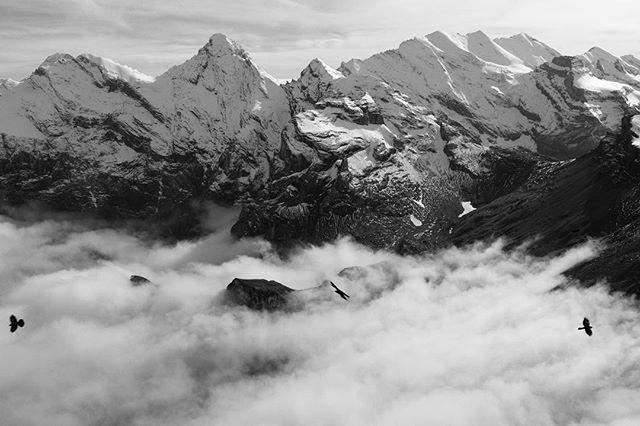 #switzerland #suisse #bw #alps #lauterbrunnen #birds #mountains #landscape #fuji #fujifilmx100s #fujix100s #jungfraujoch