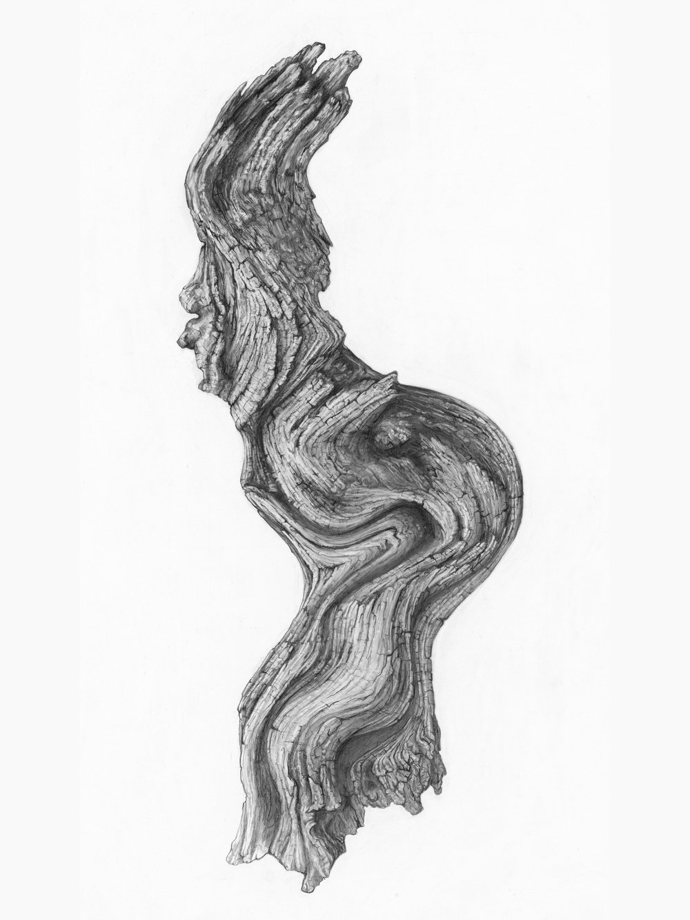 03_Petecia La Fawnhawk_Wise Old Medicine Woman (Driftwood)_graphite on paper_ 40 x 30 (1).jpg