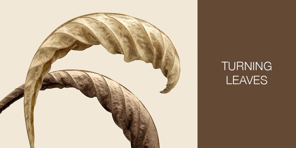 turning-leaves-jeff-friesen-photography.jpg
