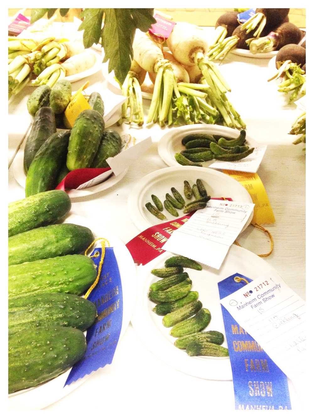 Prize-winning cucumbers at the Manheim farm show!
