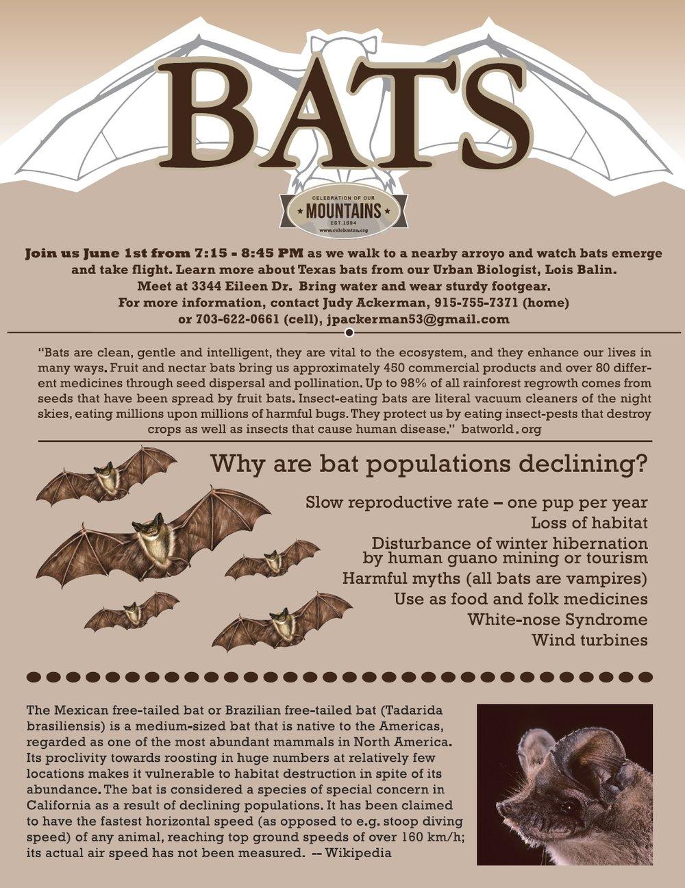 Bat flyer.jpg