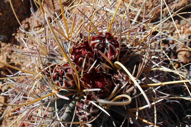 04151801 Cacti.jpeg