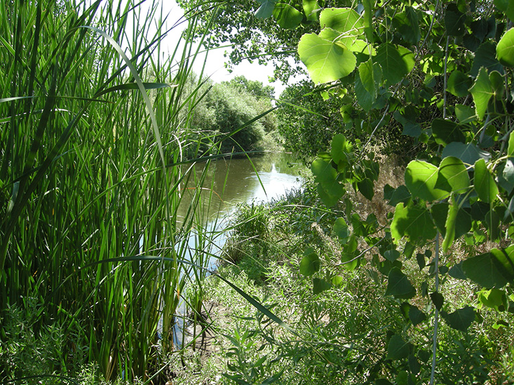 Wetlands pic main channel rio bosque.jpg