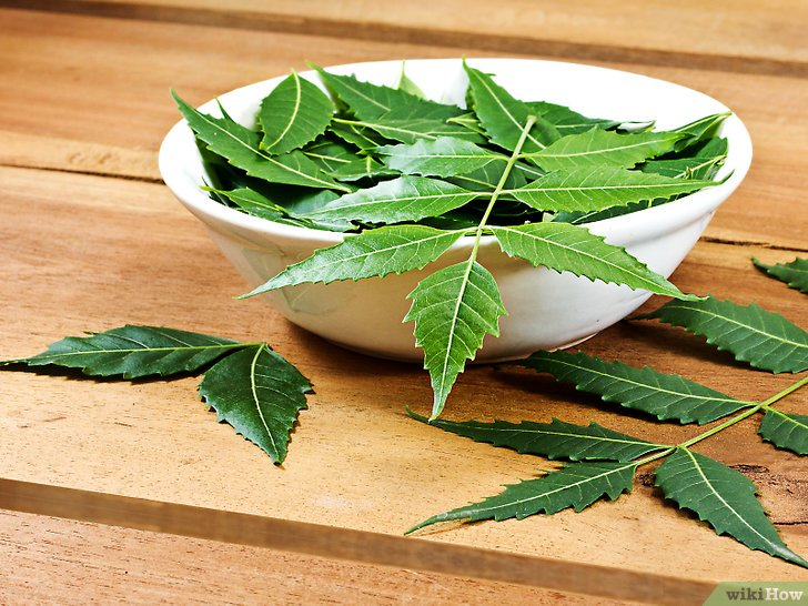 How to Use Neem Oil for Healthy Hair and Scalp — Pass Health