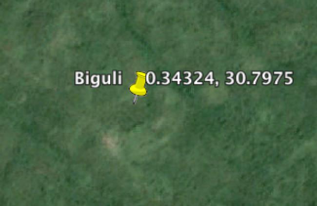 Biguli.png