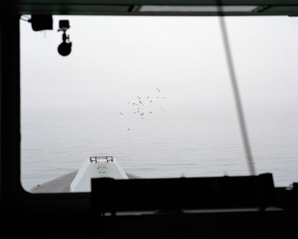 Untitled 20, from the series Albatross.jpg