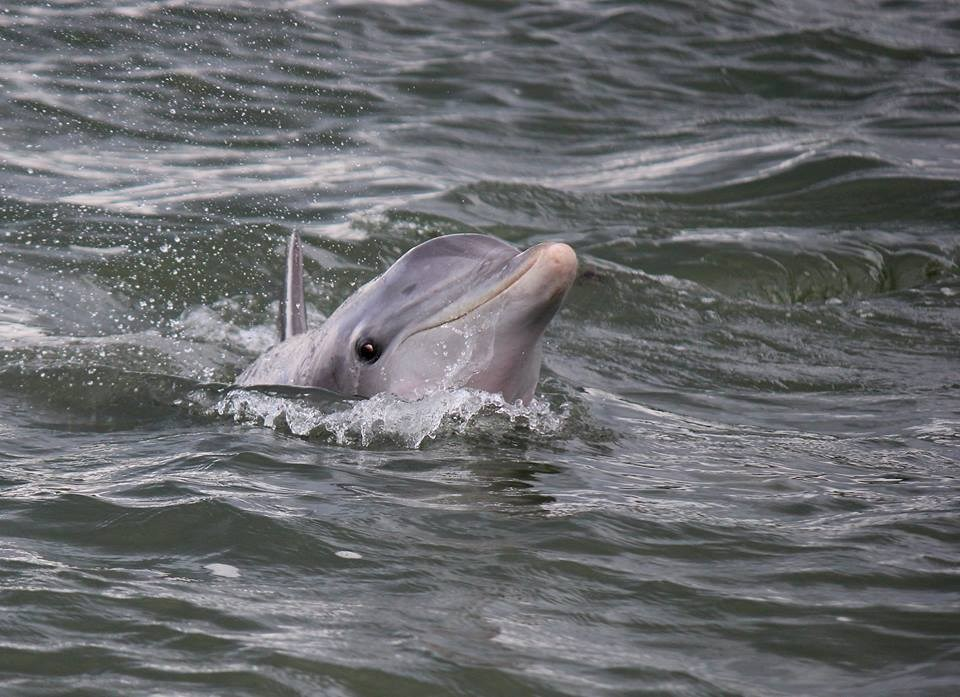 Dolphin - Rover Boat Tours