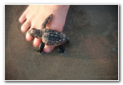 Turtle Pic - Rover Boat Tours
