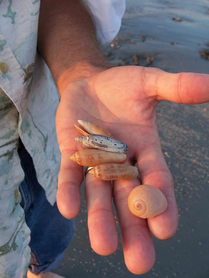 small shells.jpg