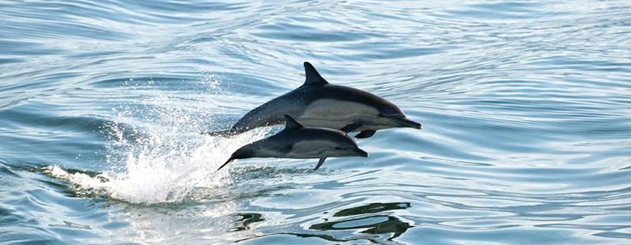dolphin crop.jpg