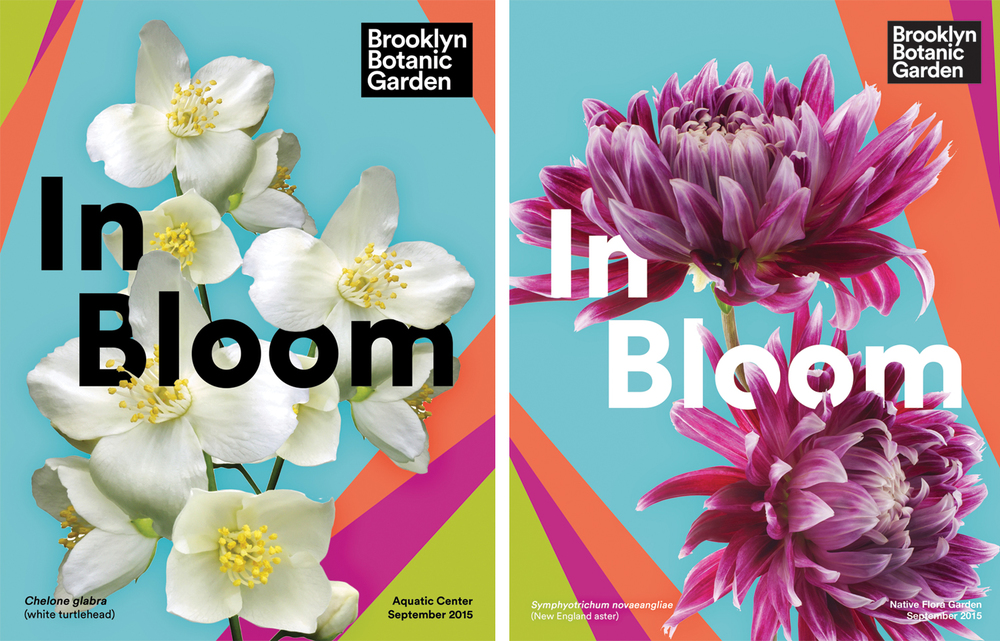 Online posters to announce    what plant species are currently in bloom