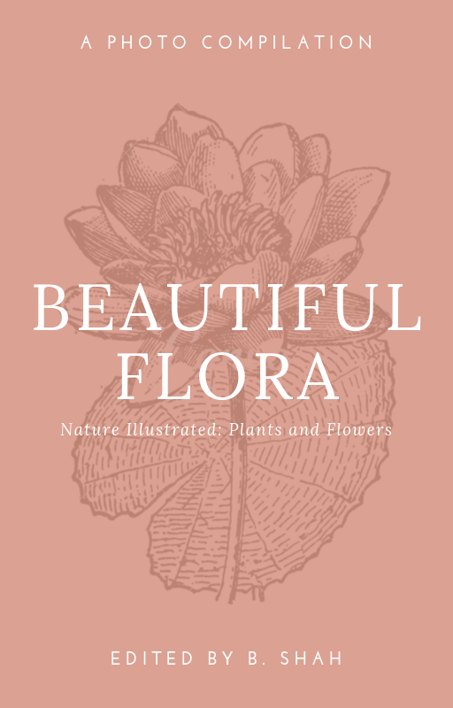 Peach Floral Illustration Illustration Wattpad Book Cover.png
