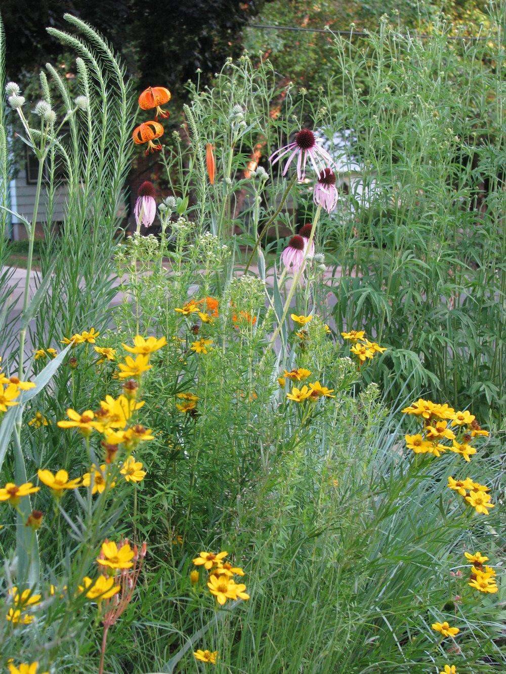 Prairie Garden - Madison