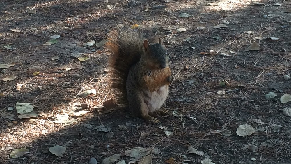 Hand-fed this one-eyed squirrel.