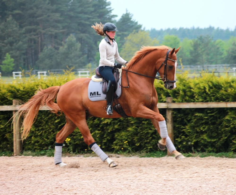 Linn and Lanigro (breeder & owner: Marie Kulin)
