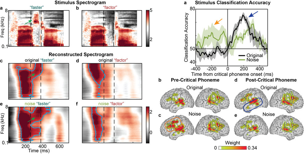 Leonard, M.K., Baud, M.O., Sjerps, M.J., & Chang, E.F. (2016). Perceptual restoration of masked speech in human cortex. Nature Communications, 13619. doi:10.1038/ncomms13619.
