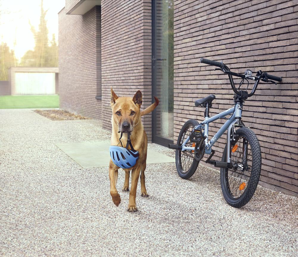 a_Kito_bike_bigflatv03.jpg