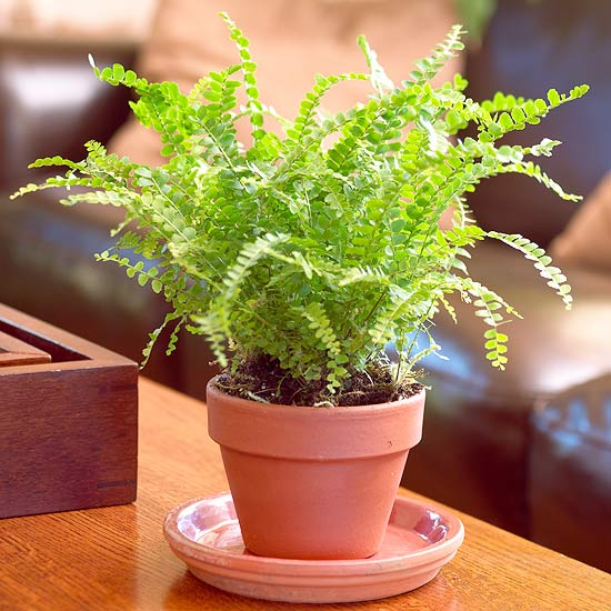 Invite Fairies into your life by bringing plants inside - try ferns! Ideas from BHG.