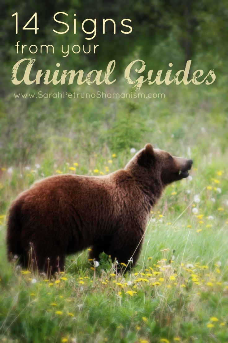 14 Signs from  your Animal Guides