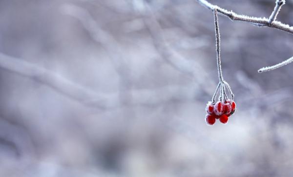 Winter Holiday Blog Break ~ Sarah Petruno Shamanism