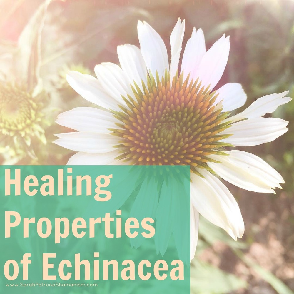 Spiritual healing properties of echinacea include bringing abundance near and warding off psychic attack. Learn more on the blog!