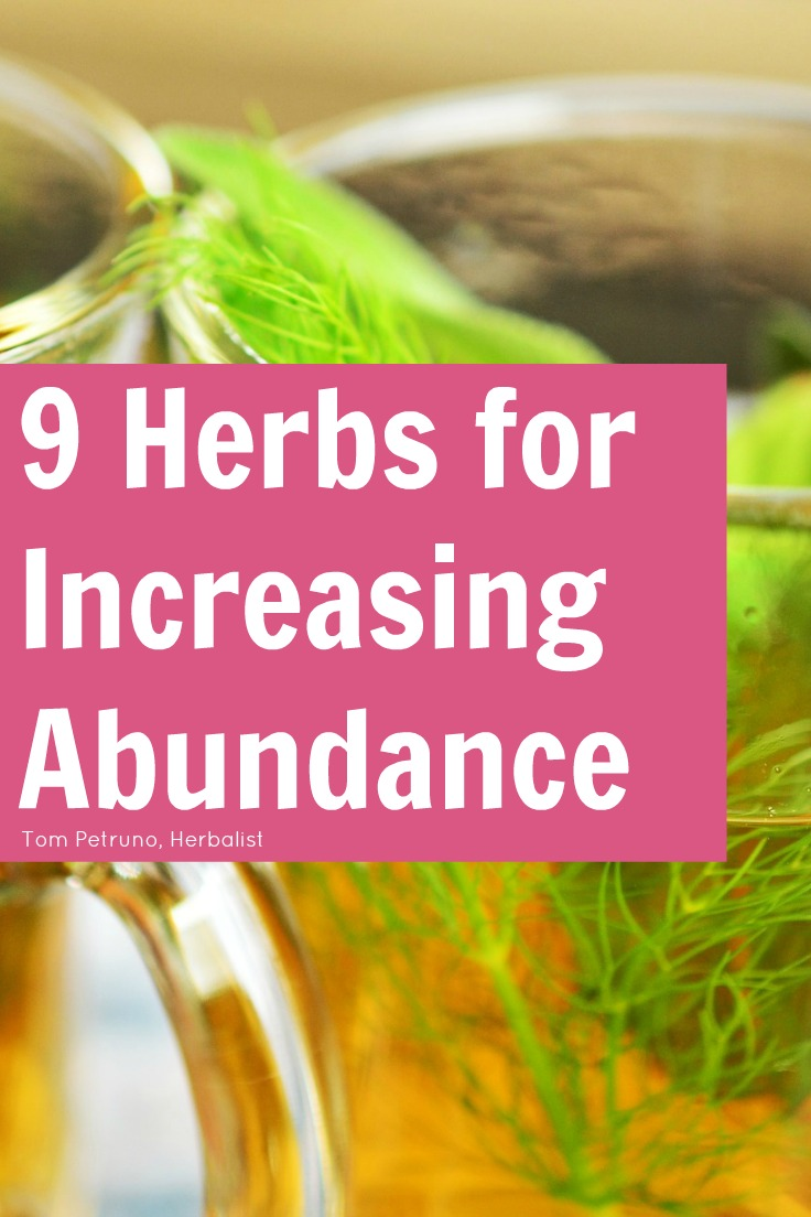 9 herbs for increasing, bringing, and growing your abundance