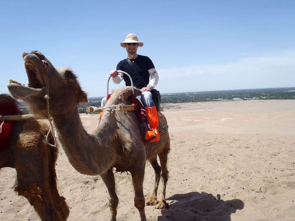 toby camel.jpg