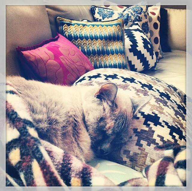 I love cuddly kitty cats and vast collections of mismatched pillows.  They totally make couches more comfy.