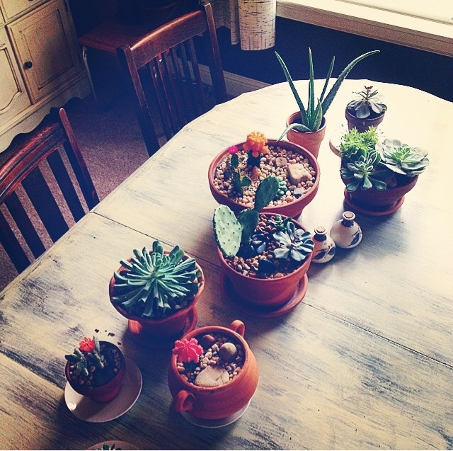 I love succulents because they are cute, beautiful and ohhhh so practical!