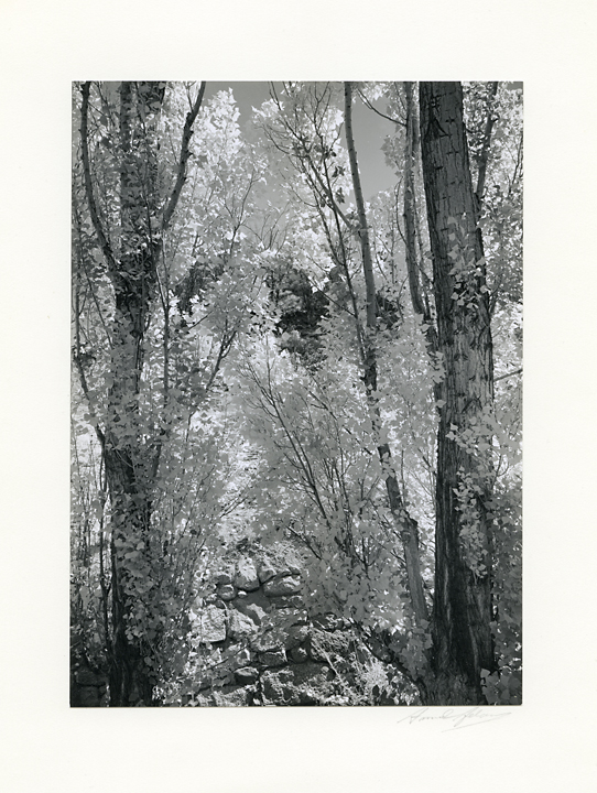 Poplars, Autumn, Owens Valley, California    ,   ca. 1937. Gelatin silver print ca. 1940s. Signed in pencil on mount. Image measures 6 7/16x 4 5/8 inches. From the estate of Dody Warren. Inventory #C1084.  Terms    |    Inquire