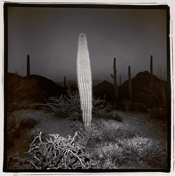 Desert Cactus, 1976. Vintage split-toned  gelatin silver print. Signed, titled and dated in pencil on print back.  Image measures 15 x 15 inches. Inventory #C1489. Terms  |  Inquire