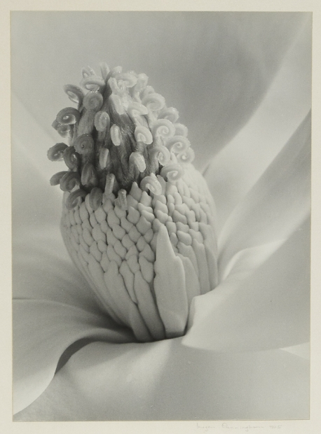 Tower of Jewels,   1925. Gelatin silver print, made ca. 1950s .   Image measures 12 9/16 x 9 3/16. Signed and dated in pencil on mount. The artist's Green Street, San Francisco label on mount verso. Inventory #C1665.  Terms    |   Inquire