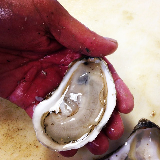 The best oysters, the best time of year, the best shucker, the best company, the best of New England. #oysters #maine #portlandme #portland