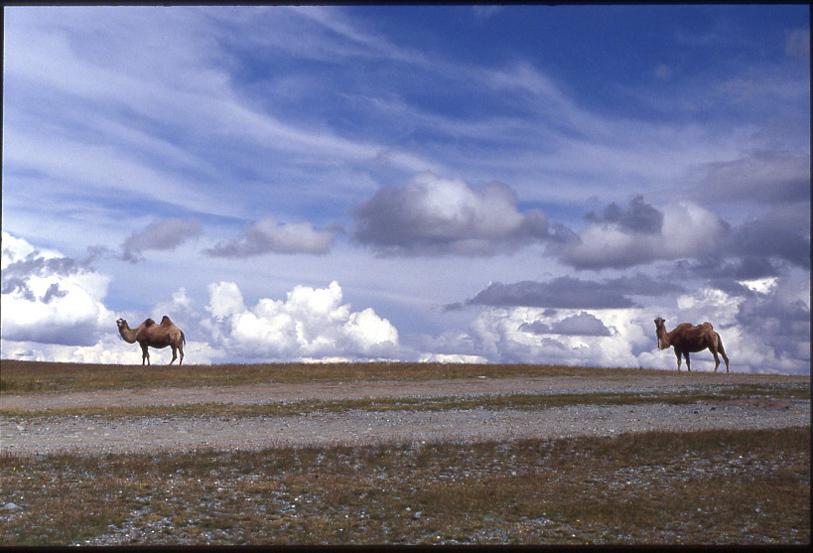 1993-mongolia_3_web.jpg