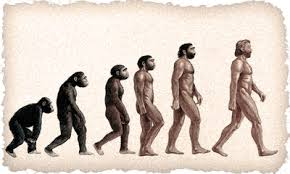 paleolithic evolution
