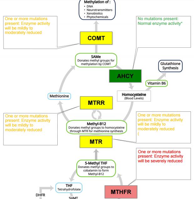 advanced methyl genes.png