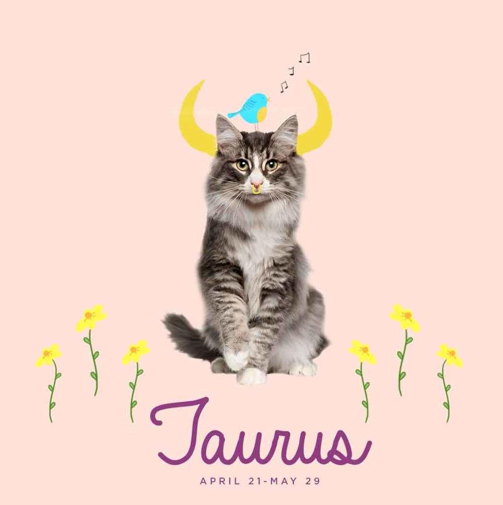 Meow Mix Cat Horoscopes