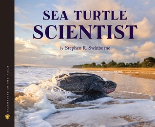 seaturtlescientist.jpg