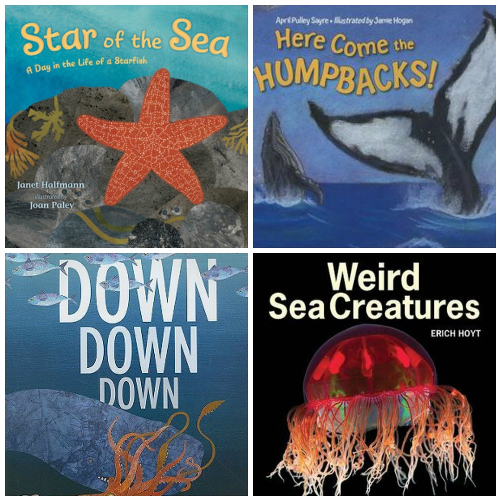 building a nonfiction classroom library part v marine life u2014 kid