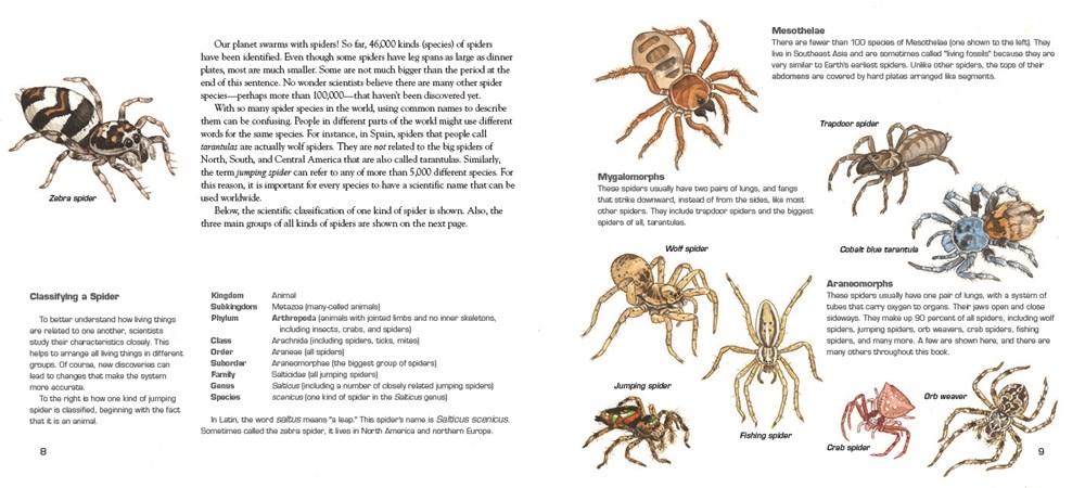 spidersinterior.jpg