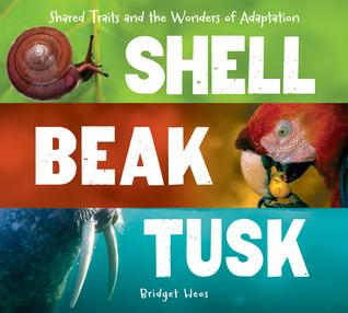 shellbeaktusk.jpg