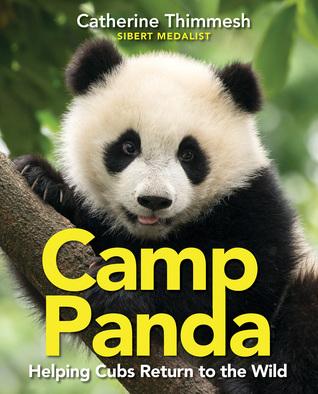 CampPanda.jpg