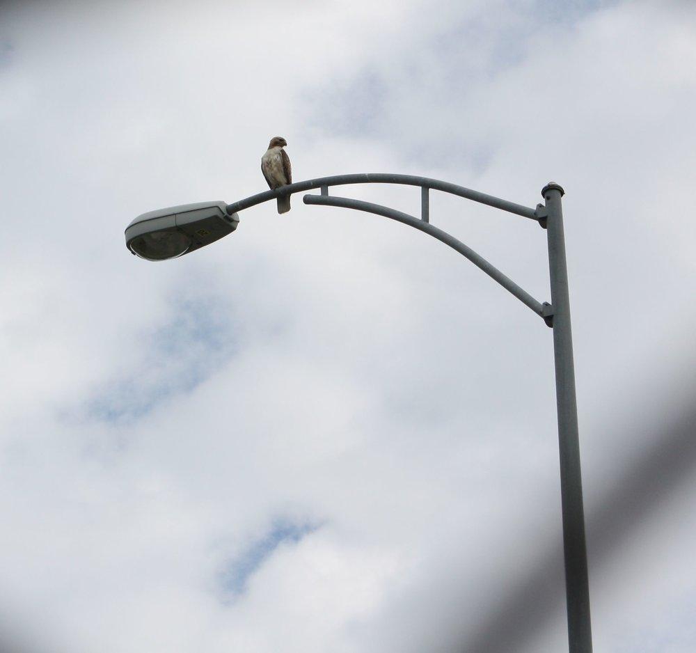 photo5-lightpole.jpg