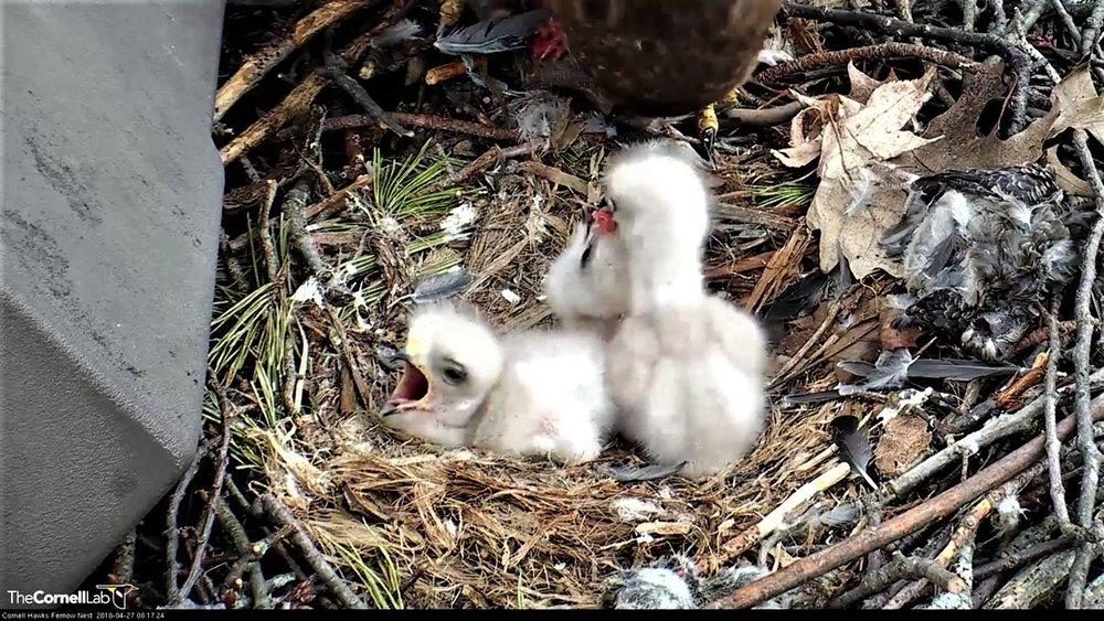 photo9-nestlings1.jpg