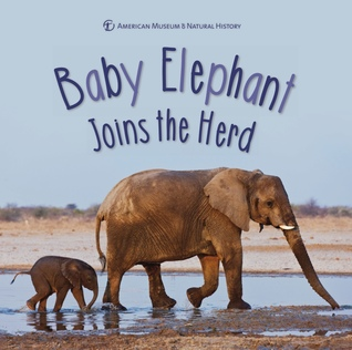 babyelephant.jpg