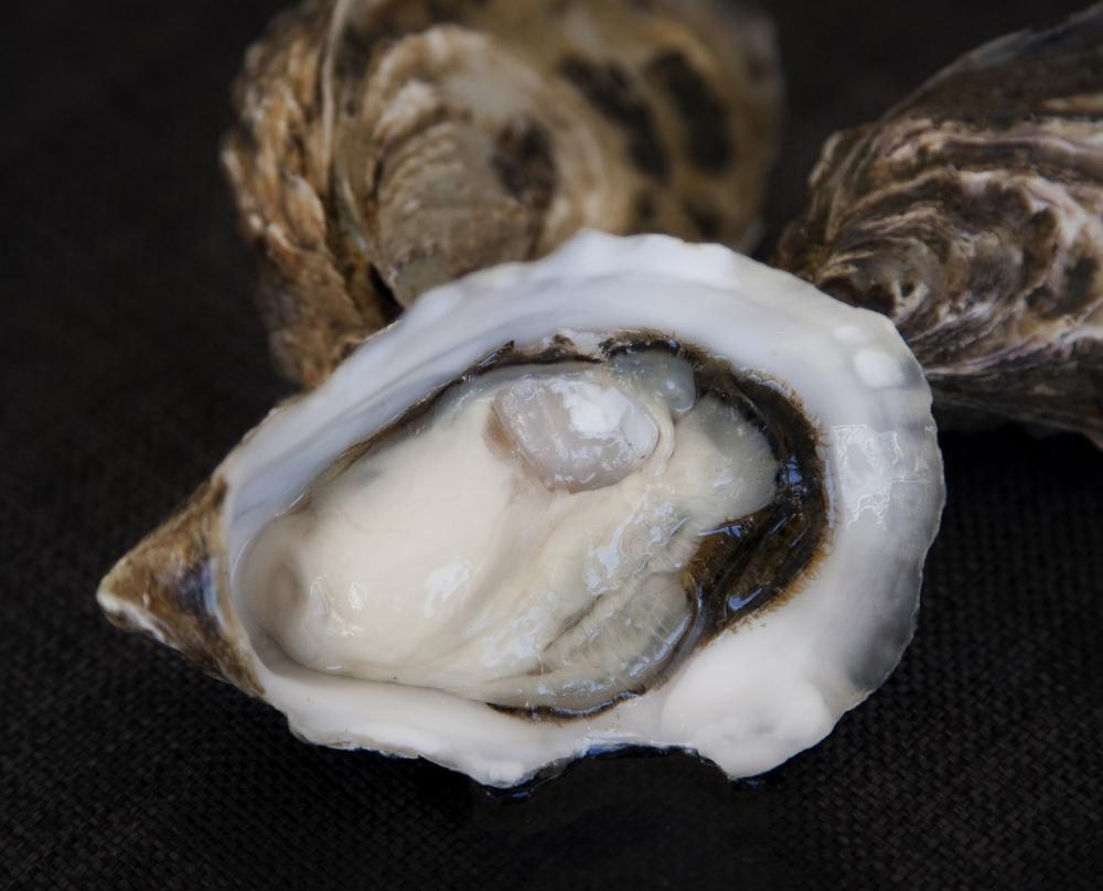 oyster_9152.jpg