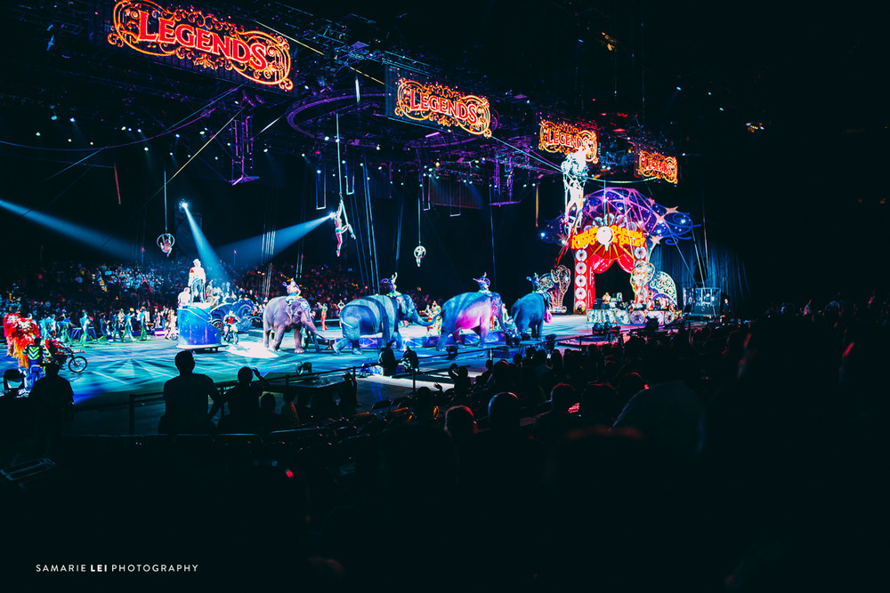 Houston-ringling-bros-Nrg-family-photographer-3.jpg
