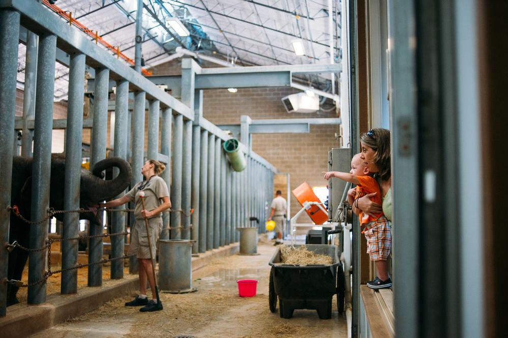 Houston-family-photography-houston-zoo-3712.jpg