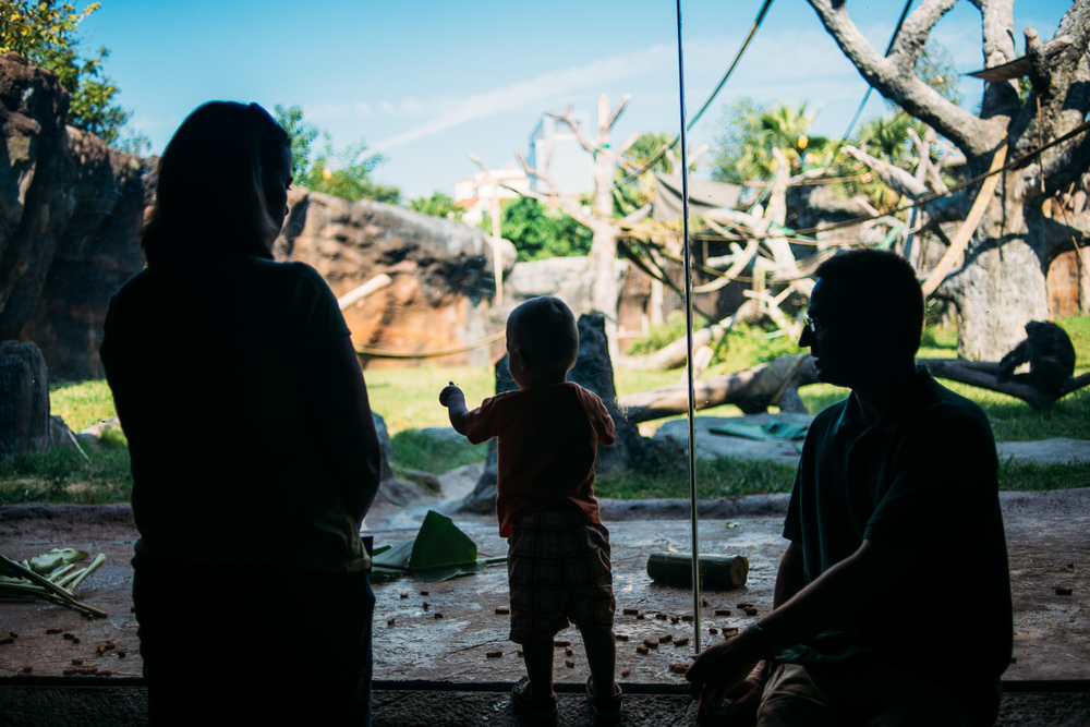Houston-family-photography-houston-zoo-3961.jpg